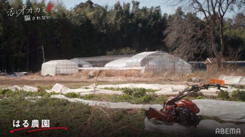 恋とオオカミロケ地「はる農園」画像